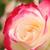 Lilian Rose Mary Higgs